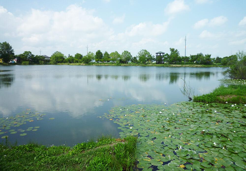 北村ヘラブナ公園