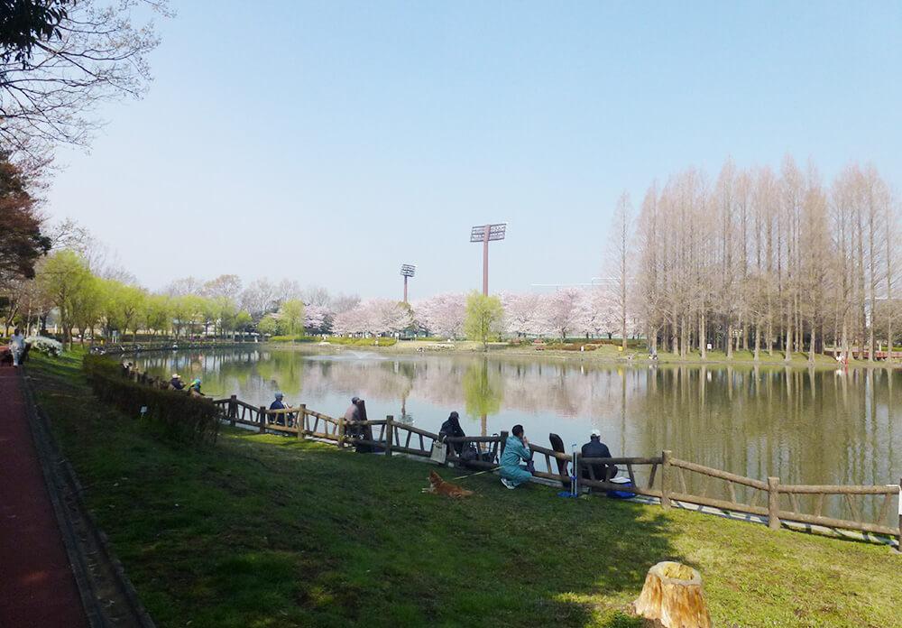 北本総合公園の池