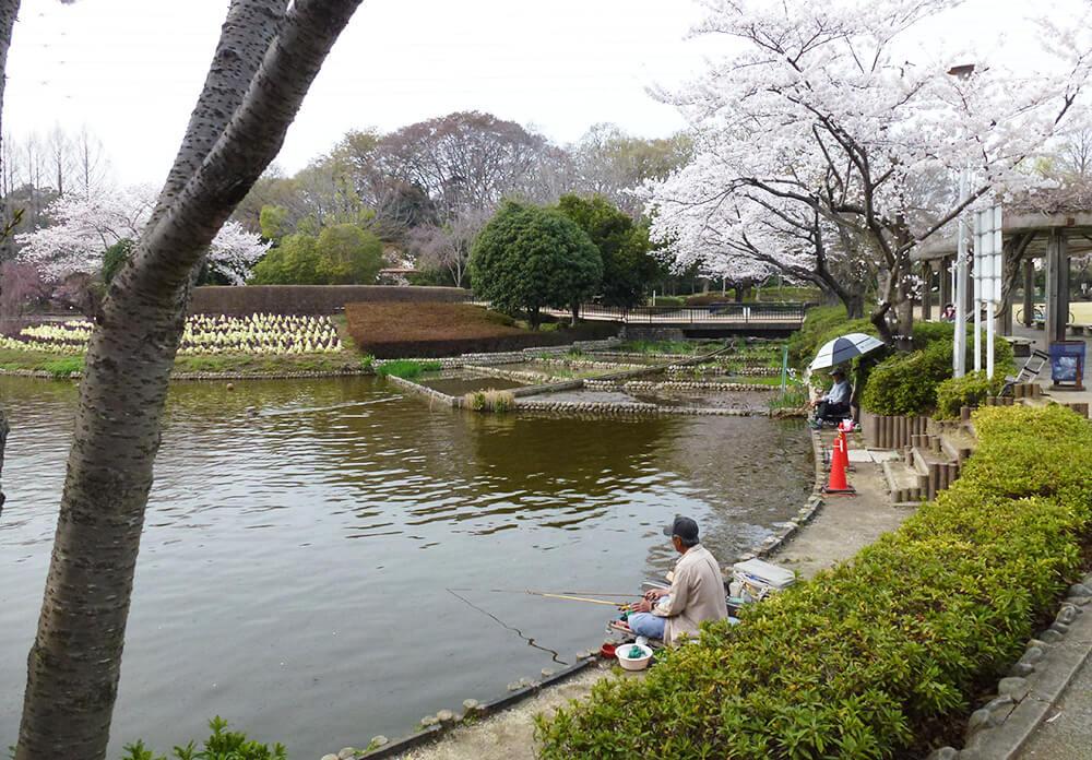 さぎ山記念公園の池