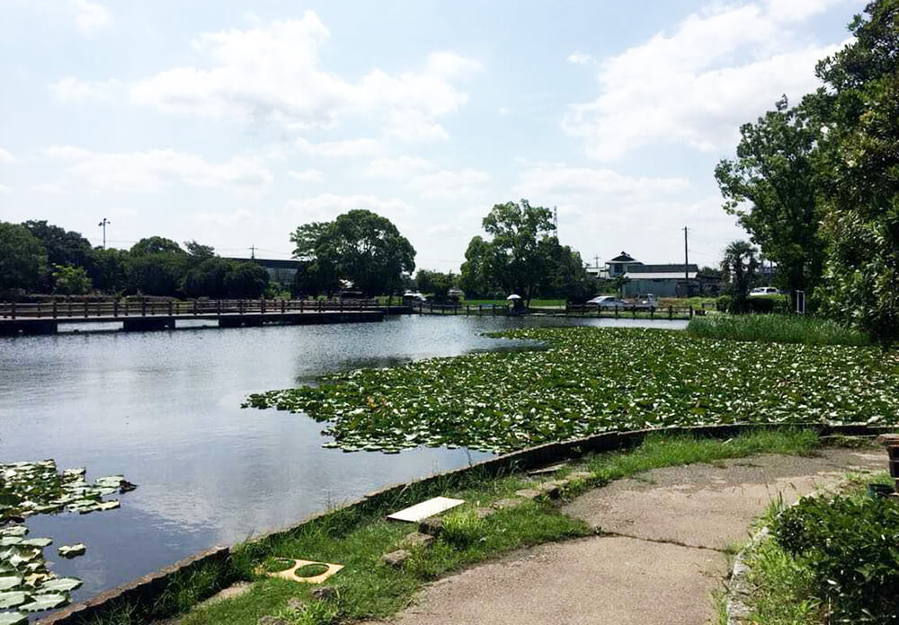 薬師沼親水公園